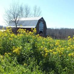 barn with yellow flowers good