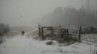 snowy day behind barn