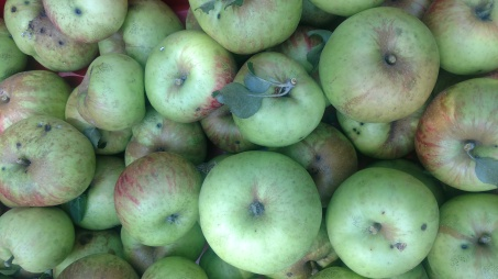 wdf apples