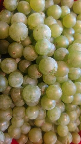 wdf grapes