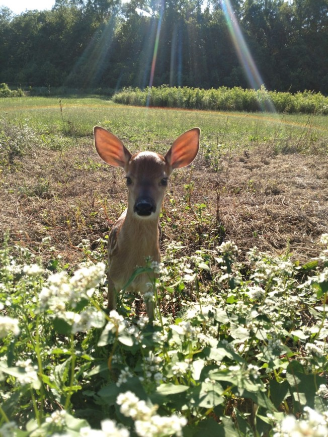 fawn 2 June 2019