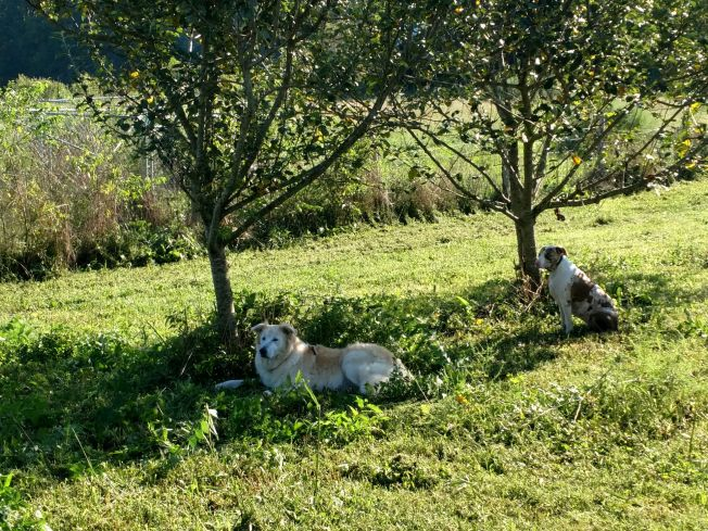 c and w lounging under apple trees Aug 2019