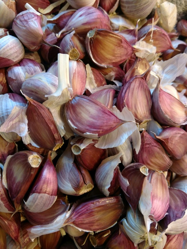 red creole garlic April 2020